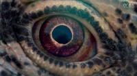 泰倫斯·馬力克新作《時間之旅》曝預告 星辰伊始至人類起源 展現關于生命的注釋