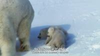 雪地求生:熊孩子的奇幻之旅 英文版 配音凯特·温斯莱特