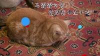 马未都感叹录节目太辛苦,观复猫集体累趴