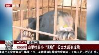 """云南江城:山里捡回小""""黑狗""""  长大之后变成熊 北京您早 180329"""