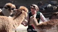 澳大利亚 与动物同住的酒店