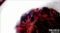 吃货历时十年,发明超声波小龙虾洗衣机