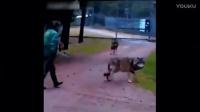 事实证明, 在这些人面前 任何动物都只能是怂包! 狼群也一样?