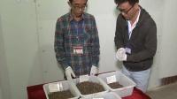 张献忠江口沉银水下考古 二期考古发掘基本结束 180420