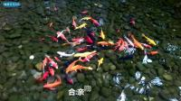 乔欣、邓伦《我们的小世界》MV.电视剧《欢乐颂2》插曲//健康多多365