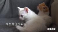 猫照镜子, 能不能认出自己?