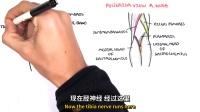 【双语】谈谈膝关节的构造 @阿尔法小分队科教组