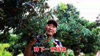 又见山上杨梅红、贵州杨梅遍布了山岗,本片实景用手机拍摄和制作…