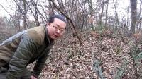 (旧版)野外生存技巧:野鸡兔子鸟脖套捕猎陷阱
