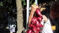40urs托斯卡纳03:逛乡间集市购新鲜食材 造访空中之城获无限惊喜