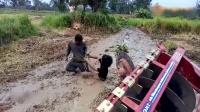 当皮皮鳝与皮皮蛇遇到越南人与推土机时, 真的只能自认倒霉!