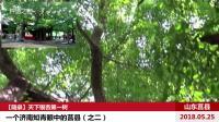 【随录】天下银杏第一树__一个济南知青眼中的莒县(之二)