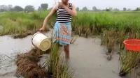 农村妹子冒雨在田里抓鱼当午餐, 收获喜人, 但这雨太大看着不忍心