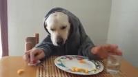 狗狗人吃饭