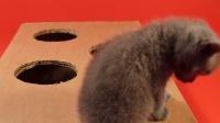 猫宝宝们在练习玩打地鼠,小家伙们真是够萌的啊