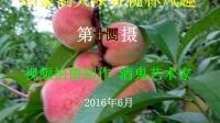 TSH视频田 织金洞大峡谷桃园风趣14