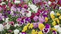 米卡视频《春天》:1-2岁小小百科