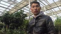 【嘿咔噜 迷你Vlog】植物园,增长见识 067