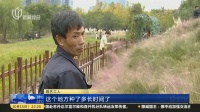 浙江杭州:粉黛乱子草花园走红  种植三年毁于三天  新闻夜线 181015