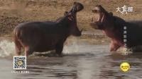 大真探 非洲狂野之河(2) 190217 高清