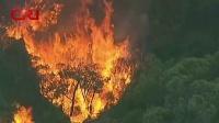 澳大利亚维多利亚州1号以来发生25起山火 国际时政 20190303