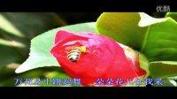 小蜜蜂-儿歌版