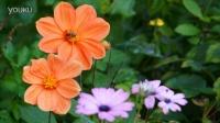 国外私家花卉摄影欣赏 邢叔攝影