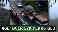 美国播日本发现的巨龟有汽车大小视频