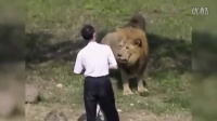 台湾疯狂男子跳进狮子园被攻击
