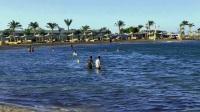 悠游埃及 红海海滨浴场体验