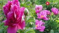 为何伤透我的心-红蔷薇《重庆市巫溪县》谭兴龙 上传