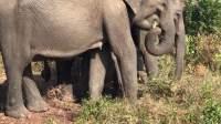 斯里兰卡旅拍MV《在树上唱歌》阿珂-Sri Lanka Volg