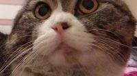 哈哈哈,我家猫咪