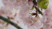 这才是最要拍摄技术的时候,樱花与鸟希望你们能喜欢,主页更多精彩。