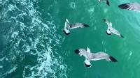 海鸥说:自由翱翔的人生最理想❣️