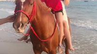 太美了 还有马😄