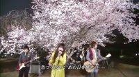 Sakura 现场版