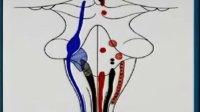 卫生部医学视听教材-系统解剖学-XT006 神经系统解剖-中枢神经