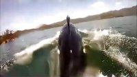 超爽!海上驾驶海豚摩托艇