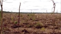 leonardo dicaprio推荐 环保宣传片《森林与人》 用行动挽救未来