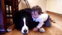 【时光】大狗亲得欢,宝宝笑得欢!