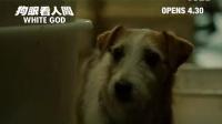 [白色上帝](狗眼看人间)香港预告片