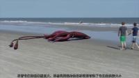 十大海洋深处最恐怖的怪异生物,巨型鱿鱼竟然只排名第八!