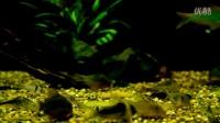 南美鼠鱼缸
