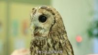 鲜游记第二季日本九州行---第一集猫头鹰咖啡馆惊魂记