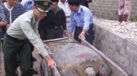 农民工在一座西汉古墓中,挖出一只千年老龟,考古专家大呼奇迹