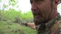 Tim Wells 男神打大猫 复合弓狩猎  野外豹子山猫