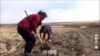 农村家门口就能挖到的野菜
