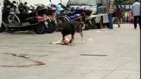 狗亦有爱*必播