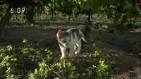 猫步走世界 <南美洲的秋天>